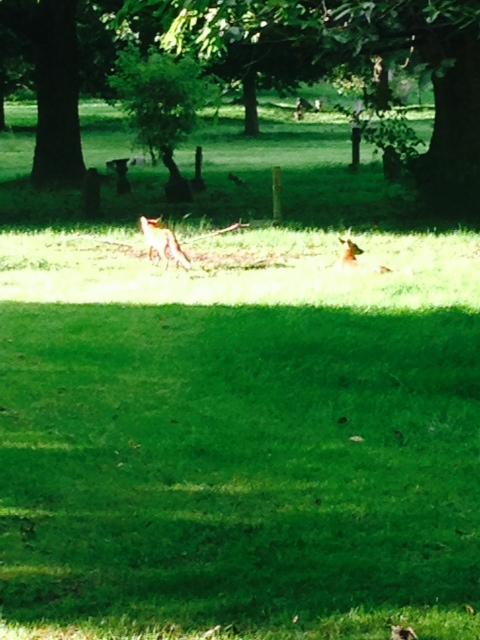 foxfulham