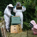 Our-Hive-3-150x150