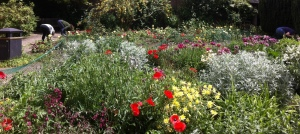 herbaceous bed1-summer 2015