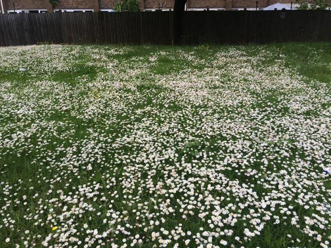 better daisies