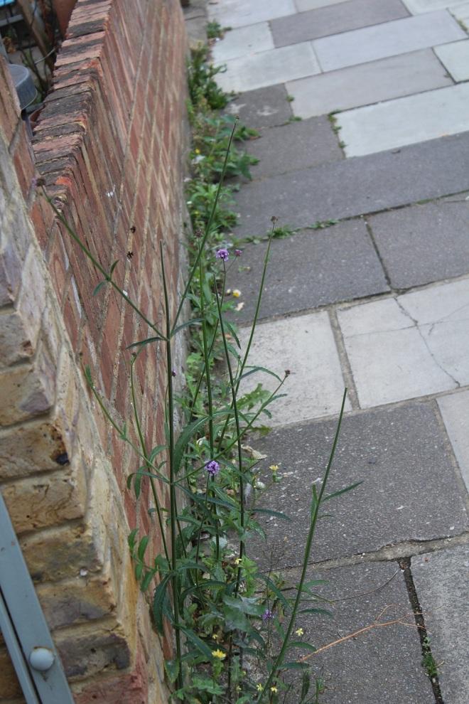 weeds-3